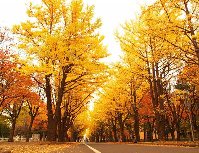 悠悠北海道推薦的賞紅葉景點 網站開通